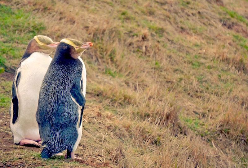 Neuseeland Die Tiere Vom Ende Der Welt Medienkontor Movie Gmbh
