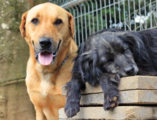 Costa Rica, das größte Hundeheim der Welt