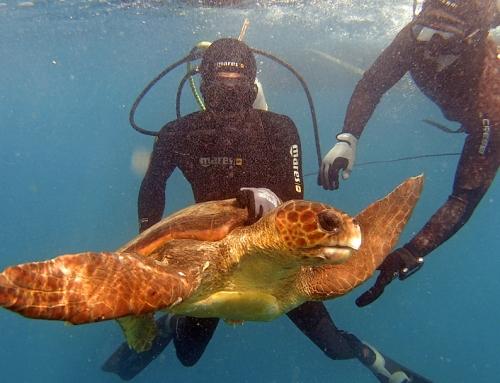 Kapverden – Zwei Hunde als Schildkrötenretter